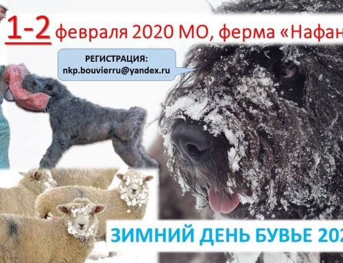 День Бувье 2020