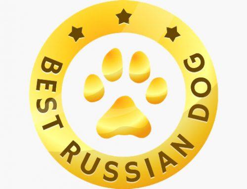 Международный выставочный рейтинг шоу собак